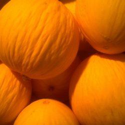 The Paceco melon